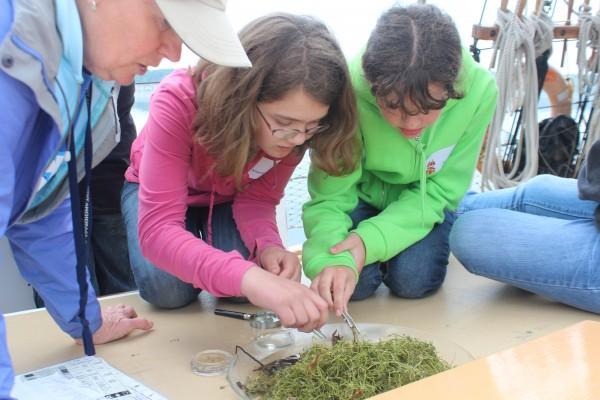Girls inspecting seaweed