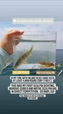 Fish in temporary tank